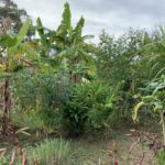 permaculture food forest