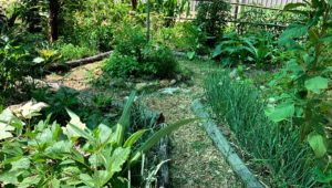 Syntropic Agriculture and Permaculture