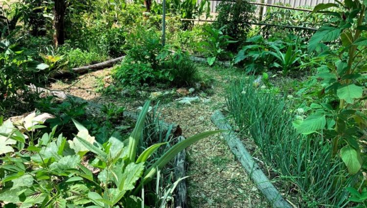 Permaculture Sustainable Vegetable Gardening - The complete guide