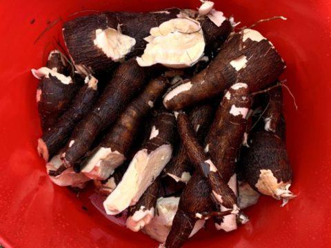 Manihot esculenta– Cassava, Manioc, Yuca