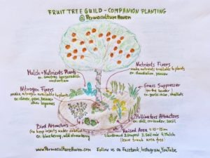Fruit Tree Guild – Grow Healthy Food… Under Your Tree!