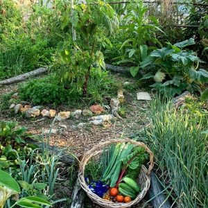 Permaculture Sustainable Vegetable Gardening - The Complete Guide - Online Course Subtropical Climate